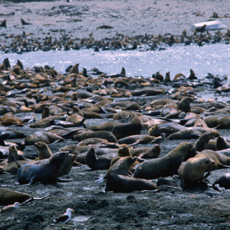 Phillip Island, Victoria, Australia, Australasia
