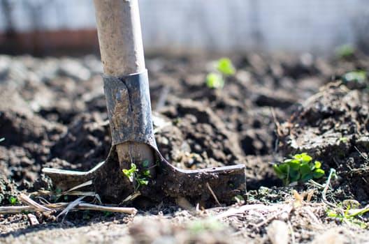 Gardening THE F 1