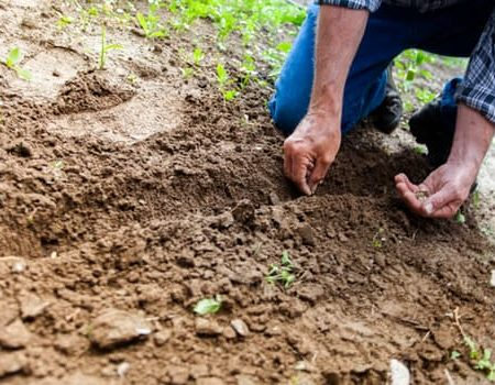 Gardening THE F 4