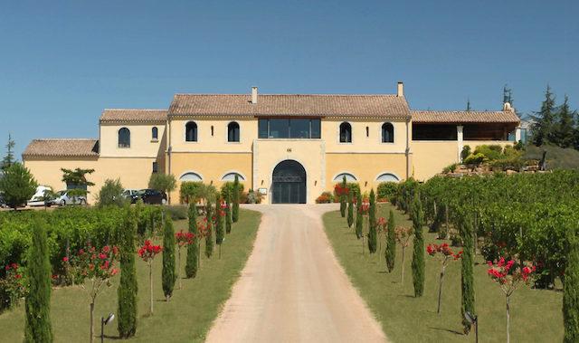 French vineyard wine
