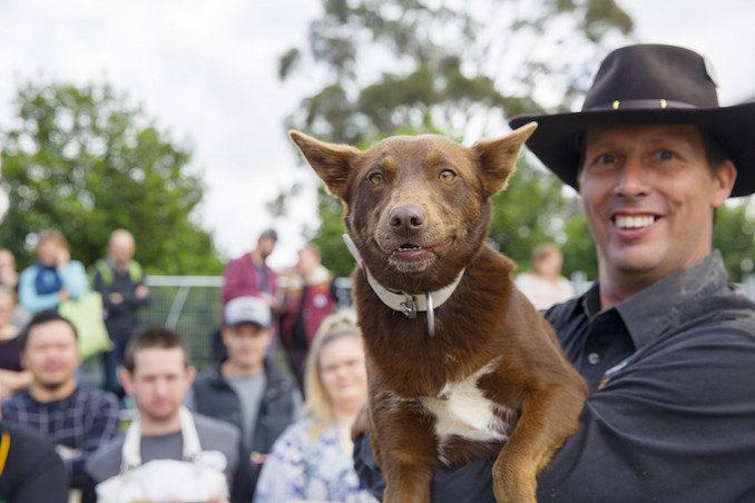 Sydney Dog Show