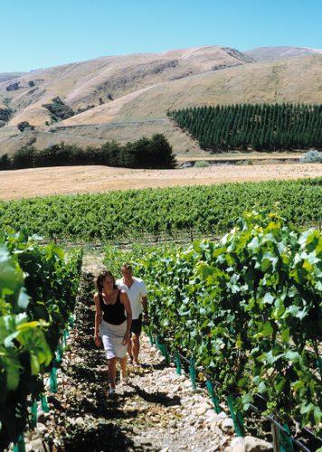 Wairarapa vines