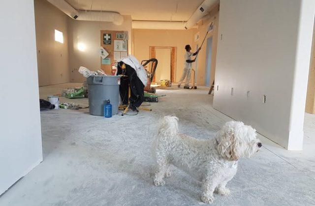 Home renovation dog