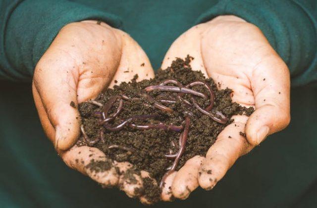Worm compost